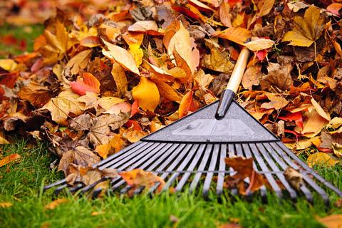 Image of rake