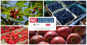 Cover photo for Clay County Extension 2019 Fruit Plant Sale