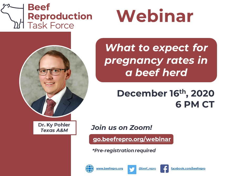 Beef Reproducation