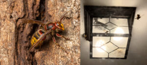 Cover photo for Wasps at Porch Lights