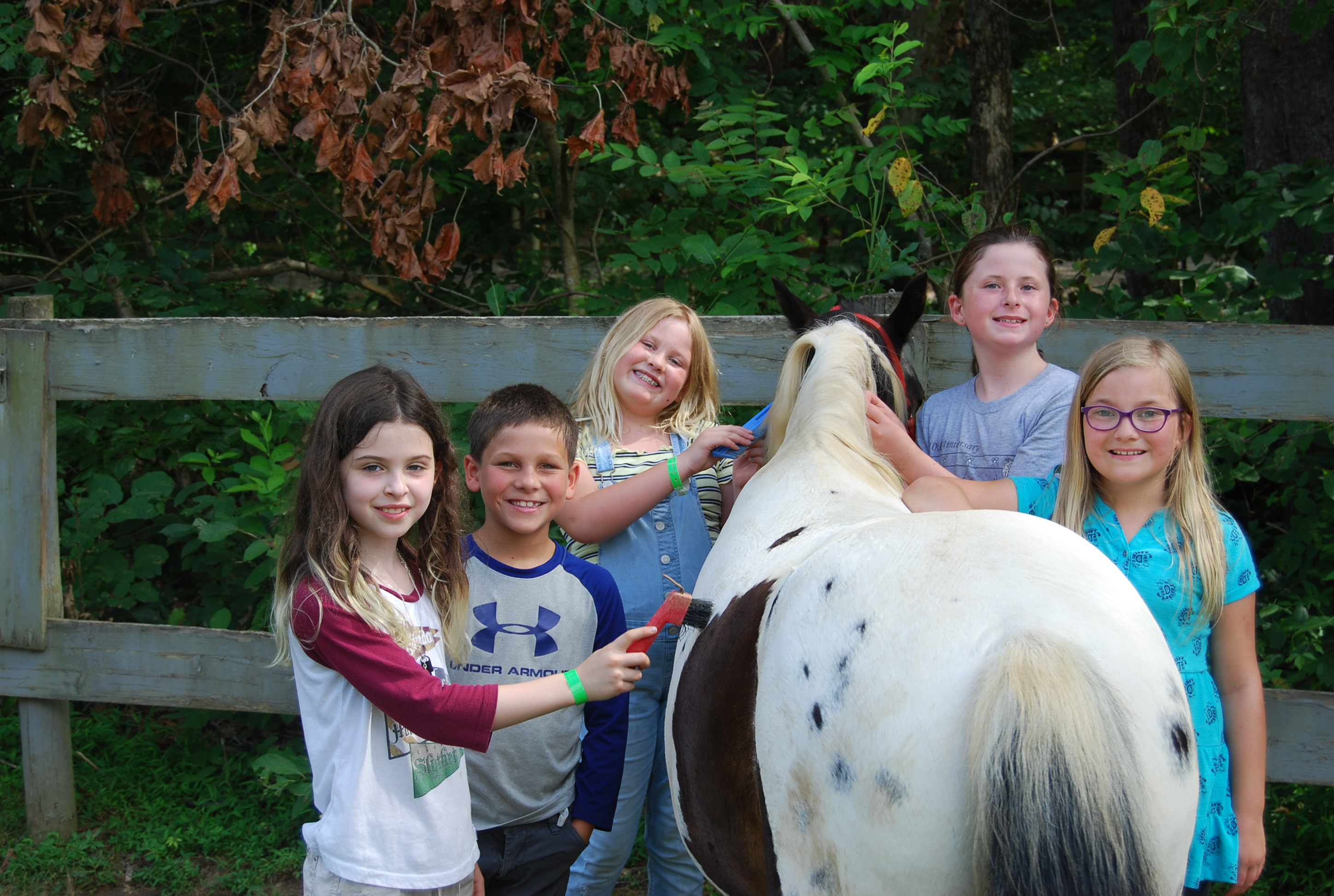 5 girls brushing a small painted horse